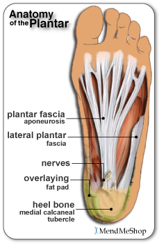 anatomy-of-plantar-med